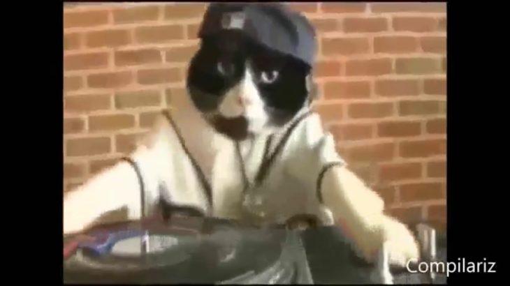 Dancing cat teach me how to dougie